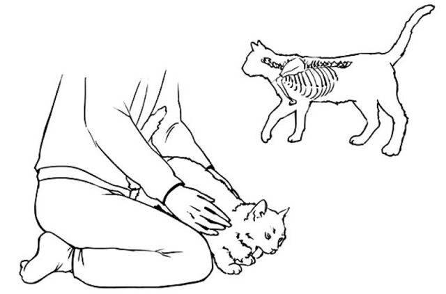 Что делать, если кошка подавилась?