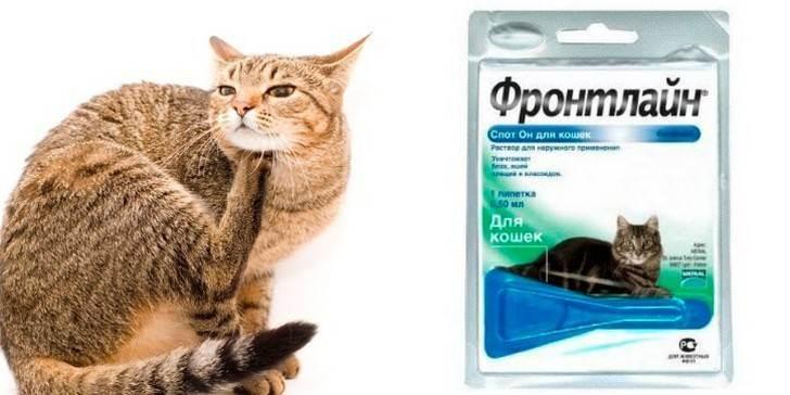 Фронтлайн для кошек — инструкция по применению, состав, отзывы