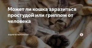 Может ли человек заразить кошку гриппом или простудой?