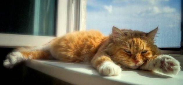 Тепловой удар у кошек. лечение
