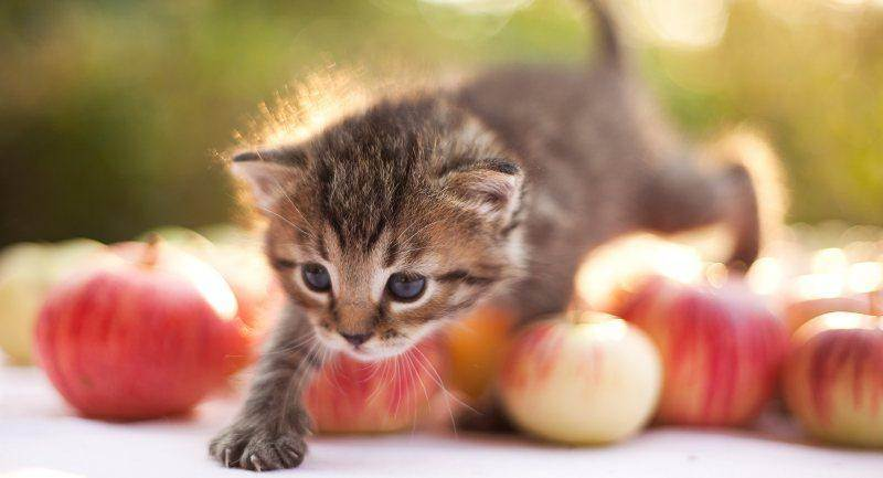 Можно ли давать кошке сырое мясо: правила кормления котят и кастрированных котов