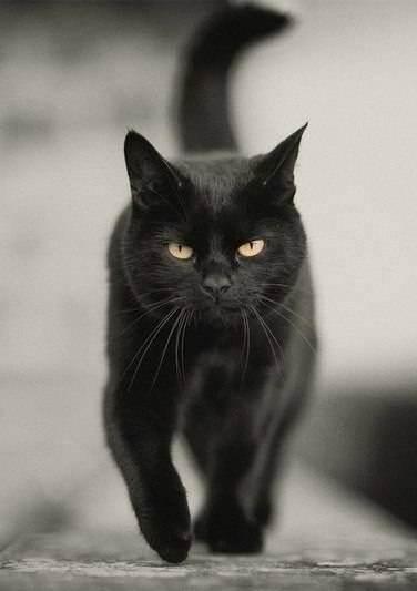 Как назвать белого котенка. клички для котят белого цвета