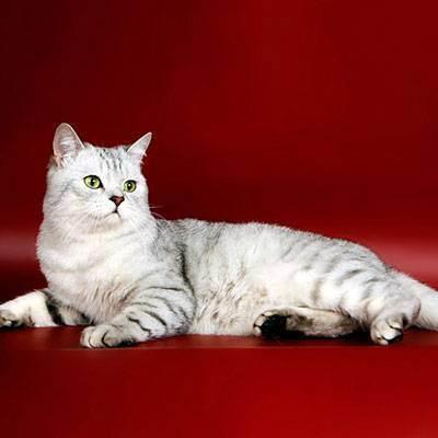 Аллергия на кошек – как проявляется (симптомы), как избавиться от аллергии на кошек? кошки, не вызывающие аллергию