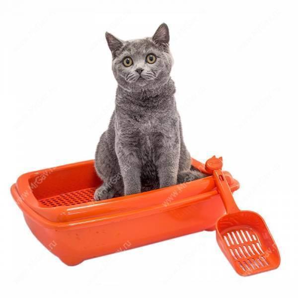 Как подготовить дом к появлению кошки?