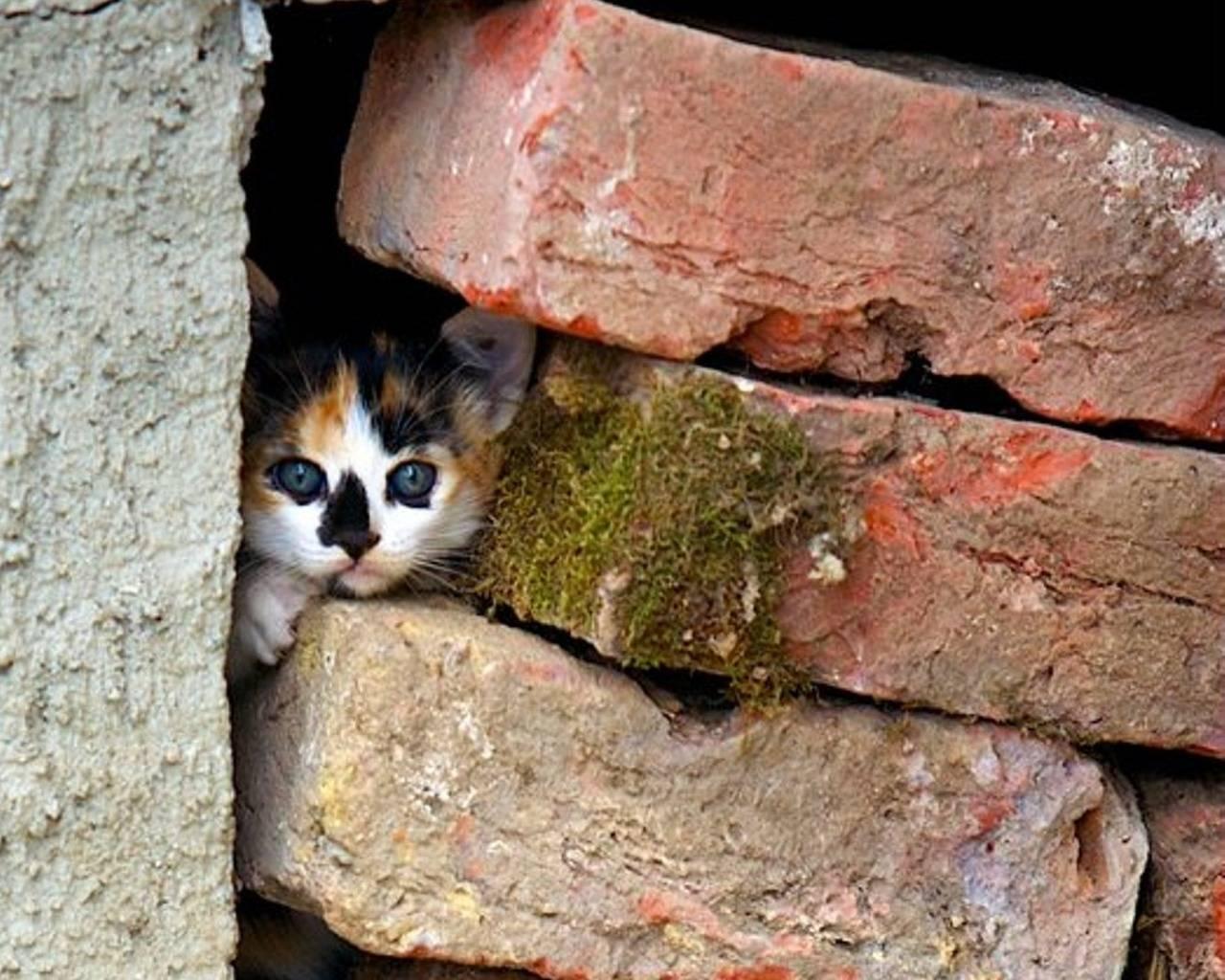 Как найти пропавшую кошку и никогда больше не потерять - лайфхакер