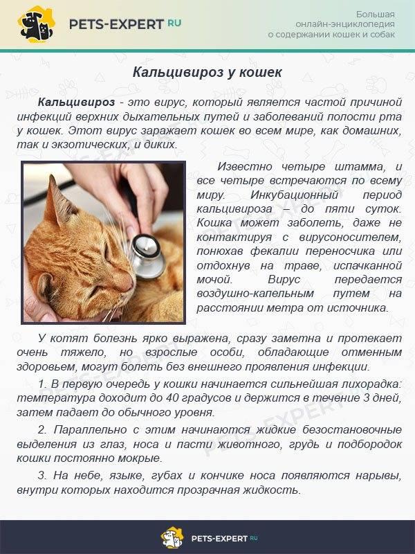 Ветом для кошек: показания и инструкция по применению, отзывы, цена