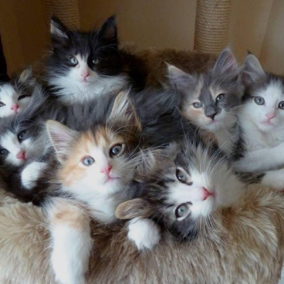 Когда котят можно забирать от кошки – правила отлучения малыша от матери