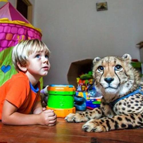 Камышовый кот - происхождение вида и среда обитания, характер и поведение, содержание в домашних условиях