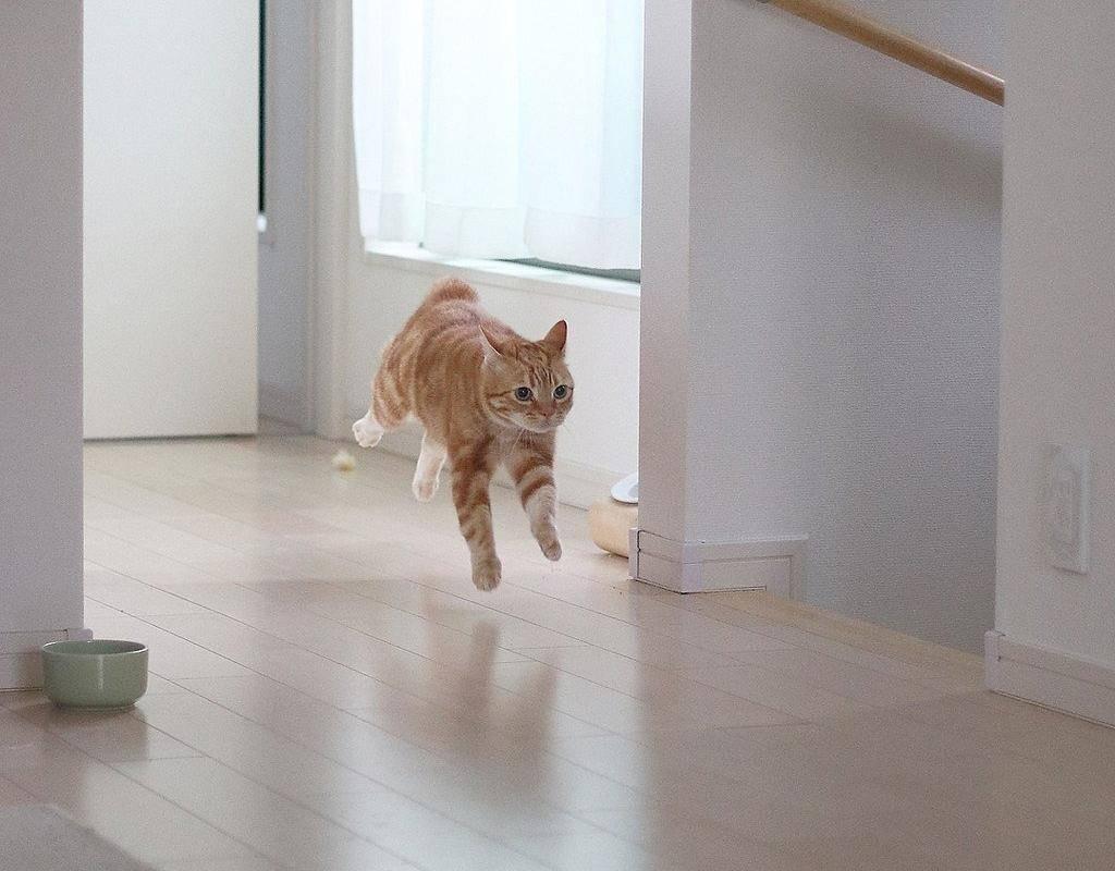 7 причин почему кот лижет стены и пол - сайт о домашних питомцах