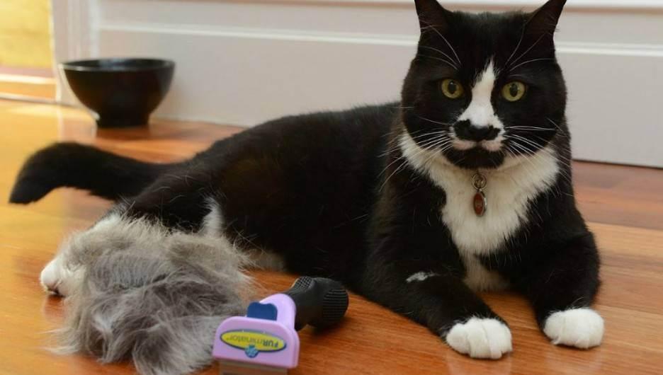 Фурминатор для кошки – фото, выбор, применение, отзывы