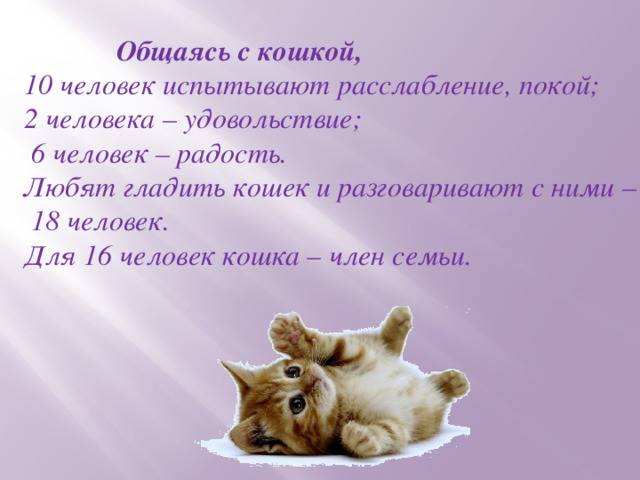 Как влияет на человека мурлыканье кошки и чем оно полезно?
