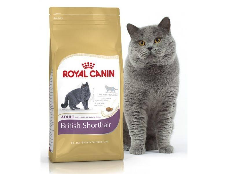 Чем кормить британского кота правильно: топ 10 лучших кормов