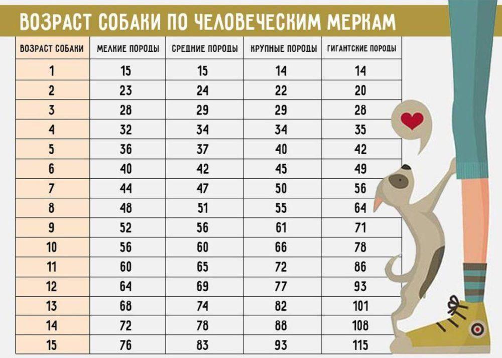 Возраст кошки по человеческим меркам – таблица соотношения