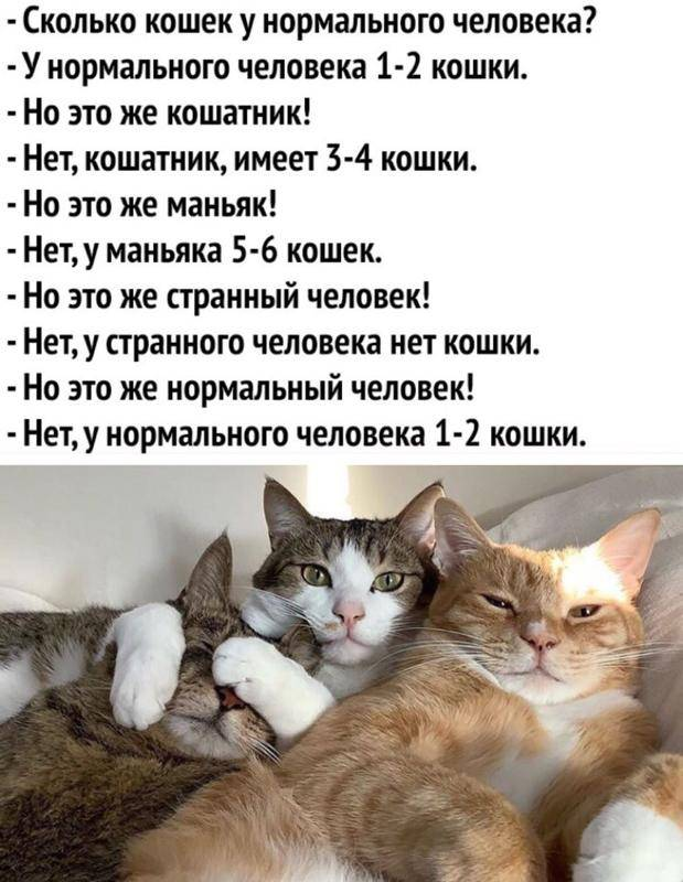 Есть ли у кошек память и какая она есть ли у кошек память и какая она