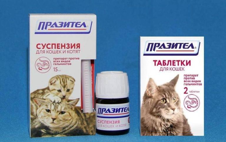 Аллергия у кошек: признаки, симптомы и лечение препаратами