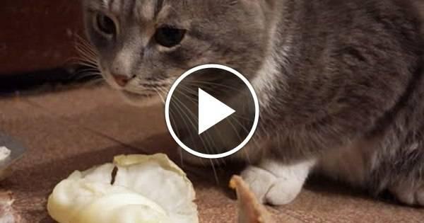 Какие овощи можно давать кошкам, а какие нельзя какие овощи можно давать кошкам, а какие нельзя