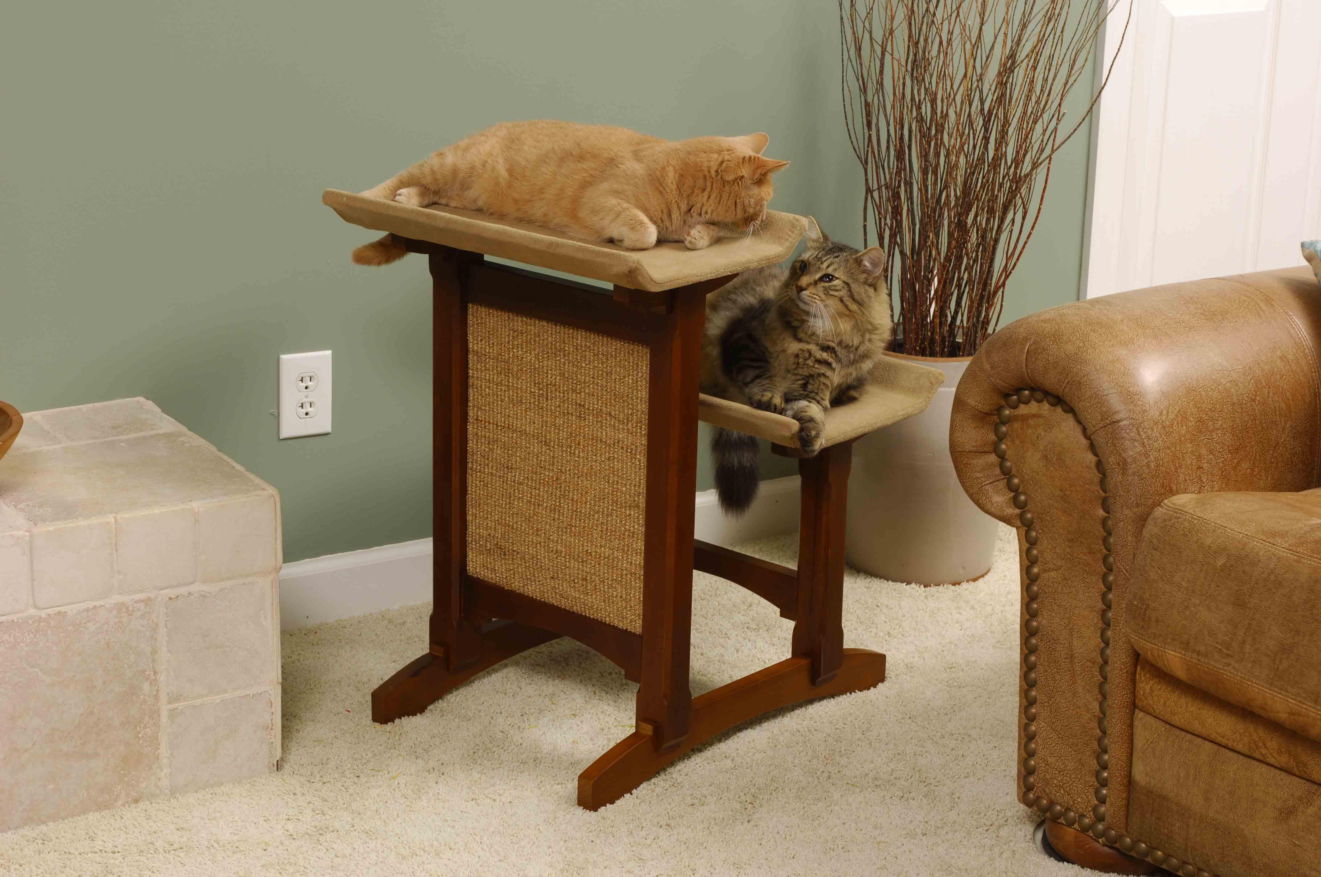 Кот царапает все вокруг. самые действенные методы борьбы с проблемой!