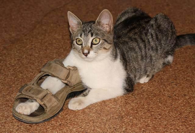 12 недопустимых вещей при уходе за кошкой :: инфониак