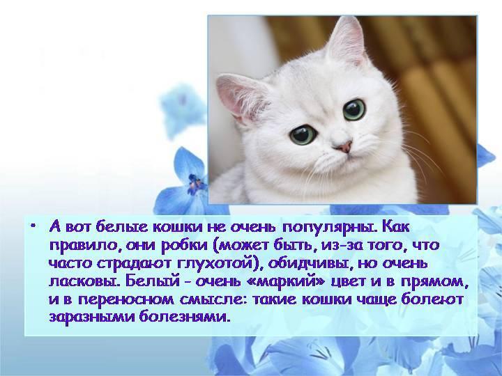 Что означает рыжая кошка в доме и при встрече – народные приметы, значение, возможные объяснения