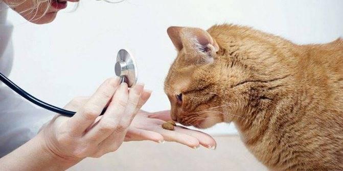 Энтерит у кошек: симптомы и лечение - профилактика энтерита у кошек   forza 10