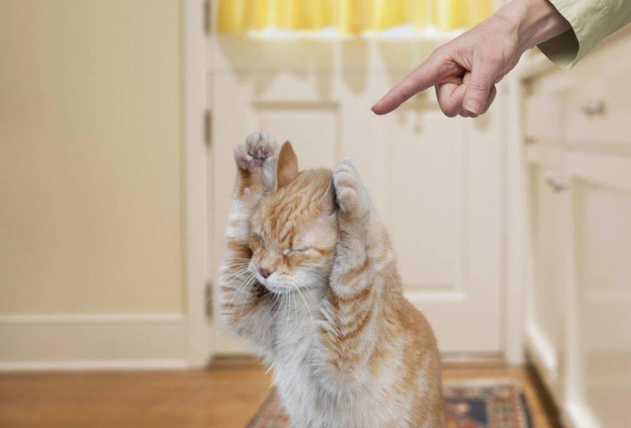 Как наказать кота? - love cats