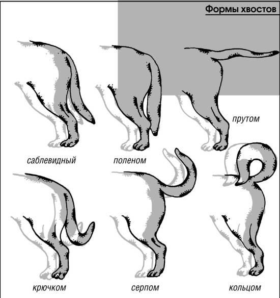 Перелом хвоста у кошки: чем можно помочь травмированному питомцу дома