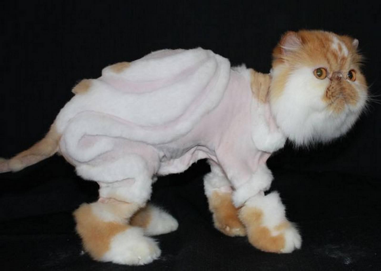 Как подстричь когти кошке в домашних условиях - пошаговая инструкция