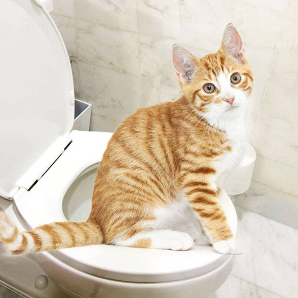 Как правильно делать клизмы котам самостоятельно дома при запорах
