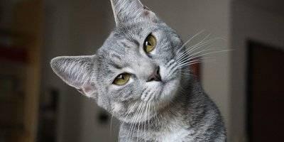 Запор у кота: что делать в домашних условиях?