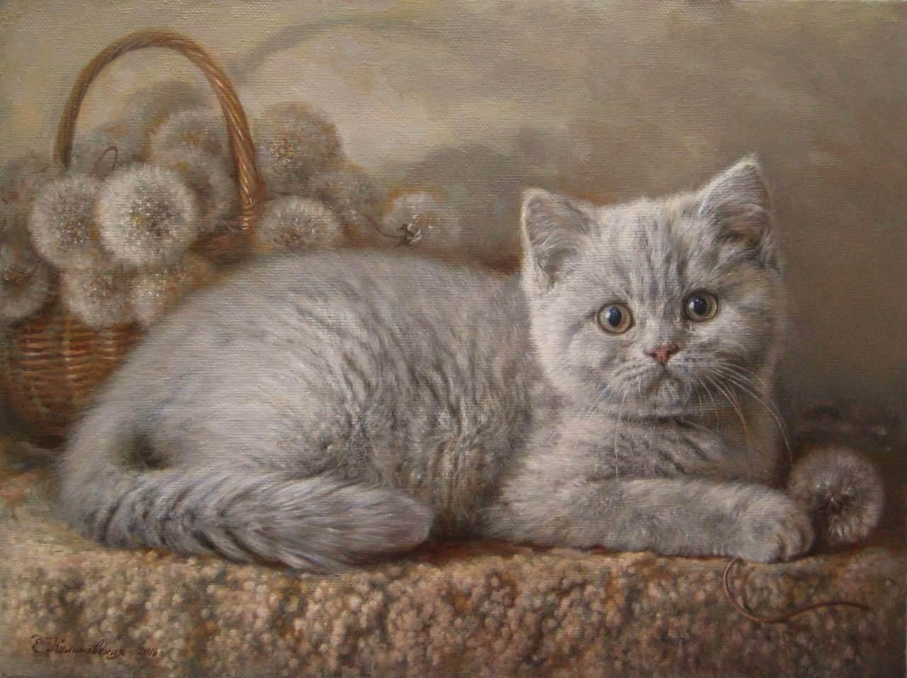 Британские котята: уход, воспитание, кормление британца, какой корм лучше, фото