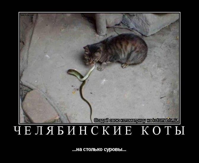Про кошачью еду. мнение специалиста.