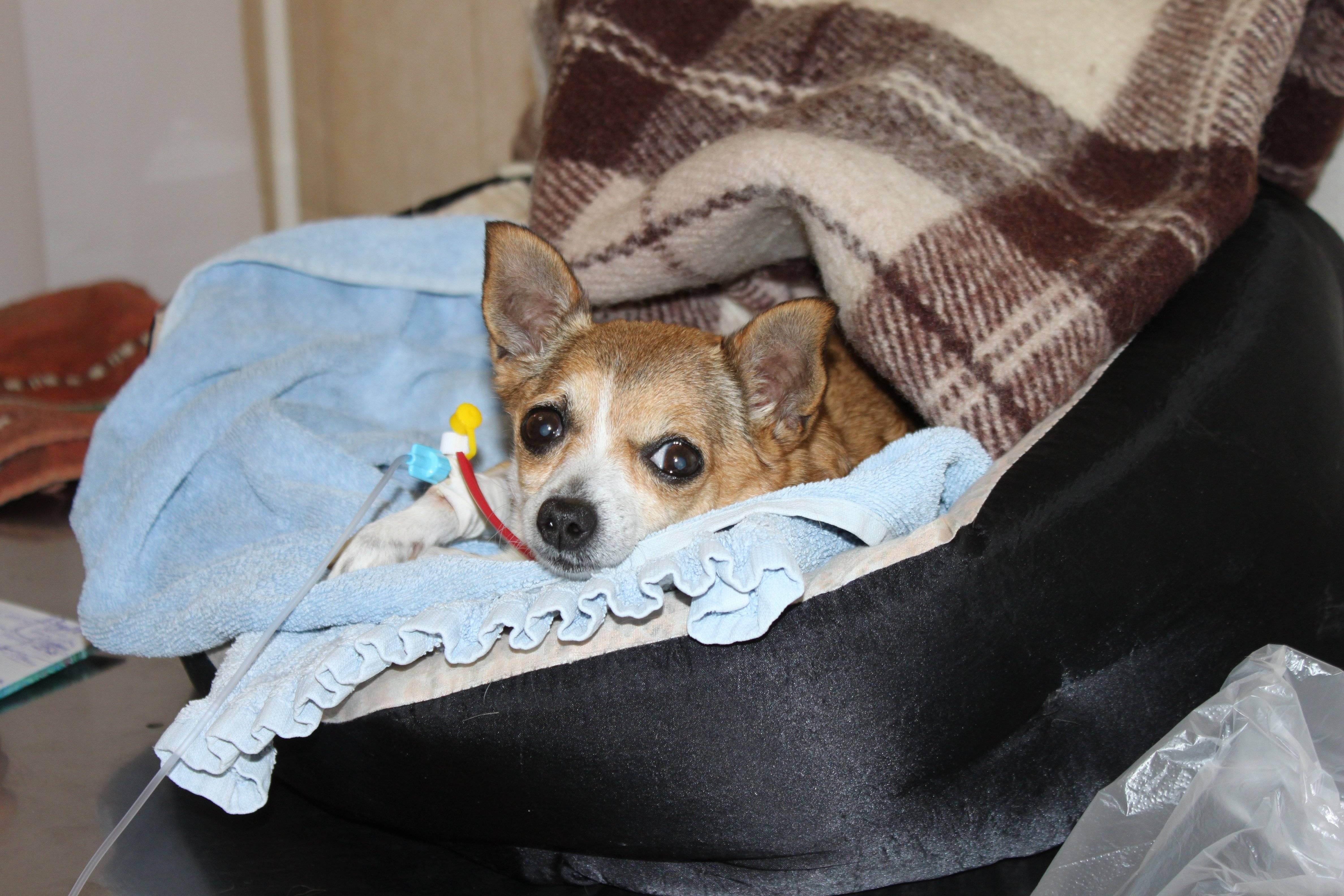 Как подготовить животное для посещения ветеринарной клиники