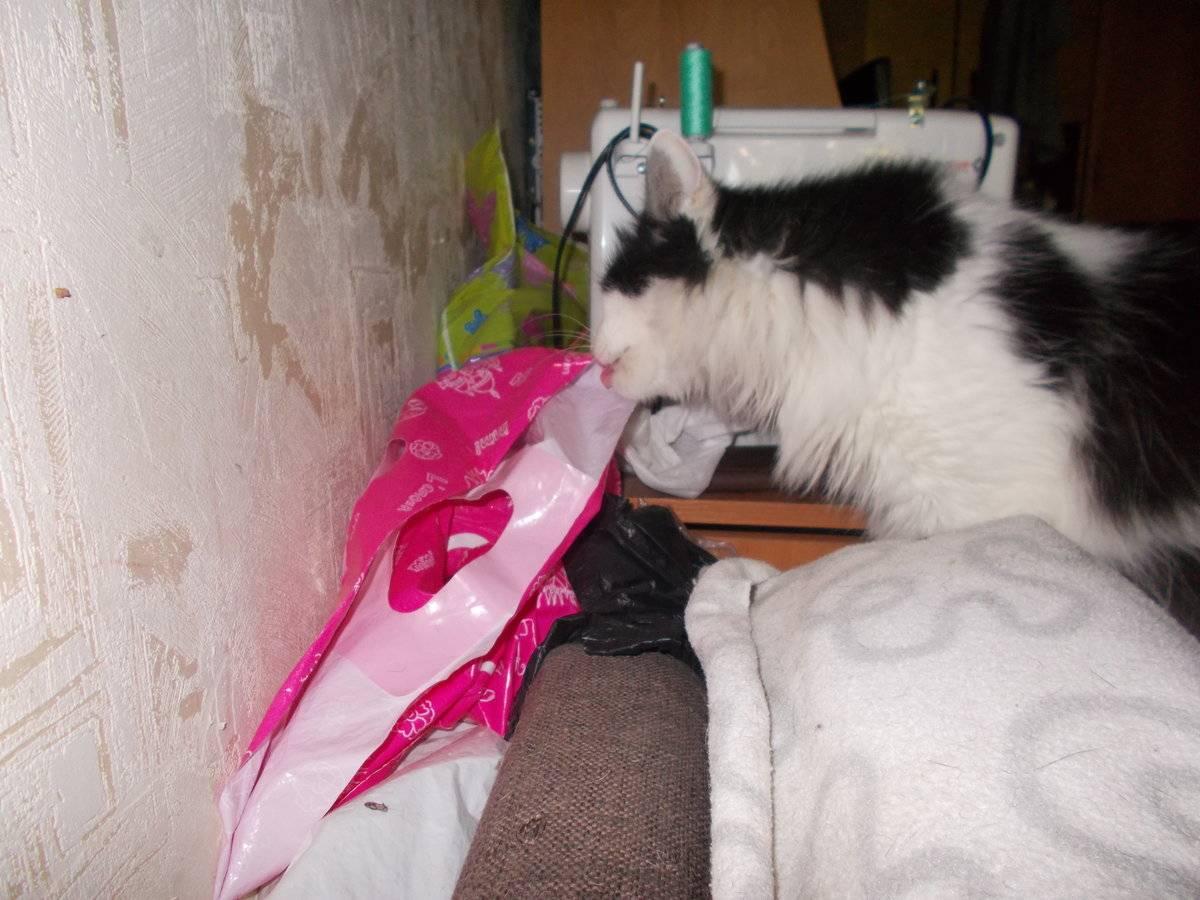 Кот лижет пакеты - причины и как отучить