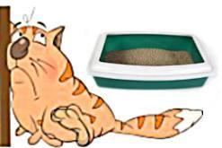 Колит у кошки как результат погрешности кормления