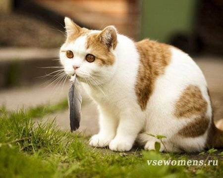 Отсутствие аппетита у котов, кот не ест или есть мало