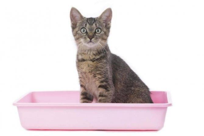 Почему кошка долго сидит в лотке