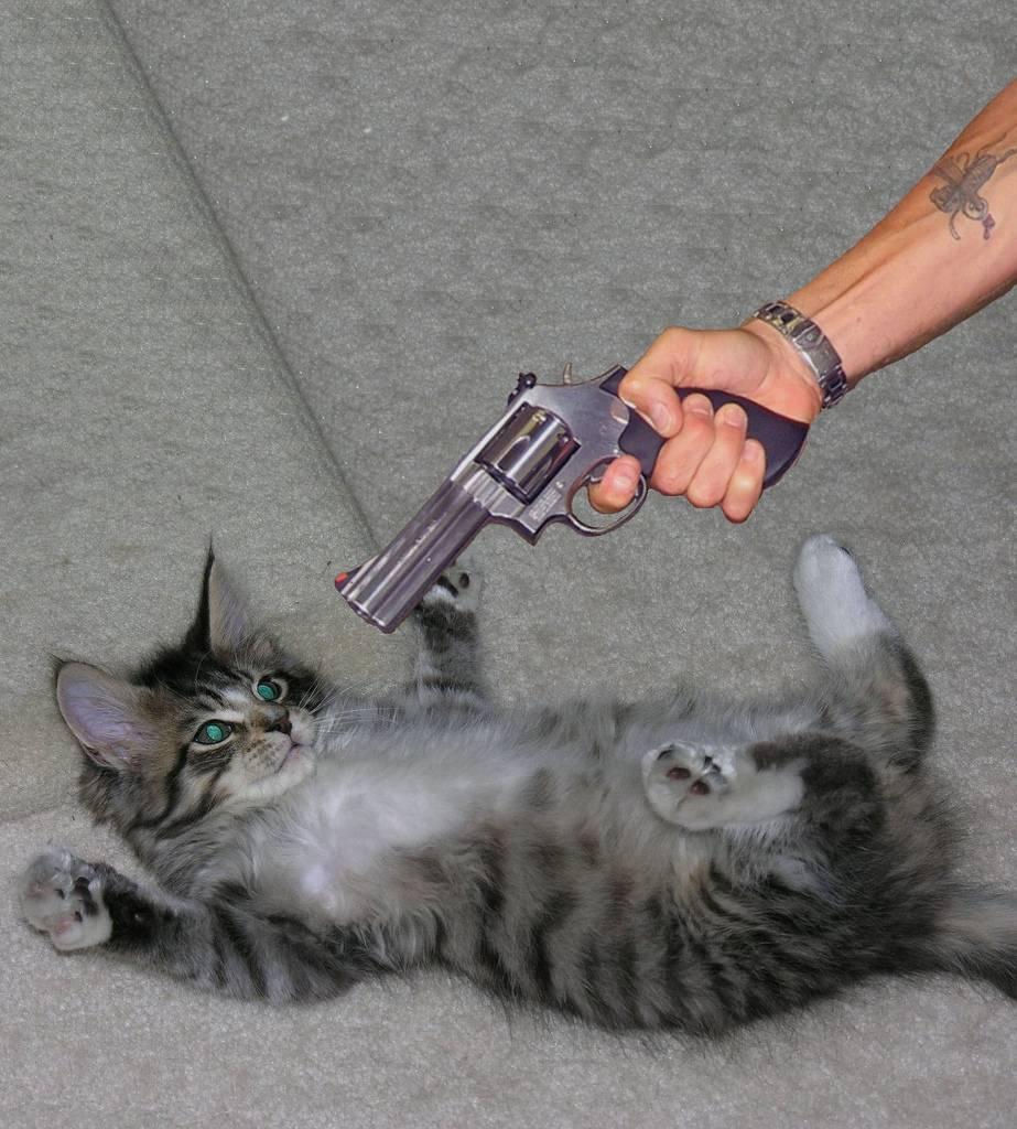 Как отучить кота или кошку гадить где попало
