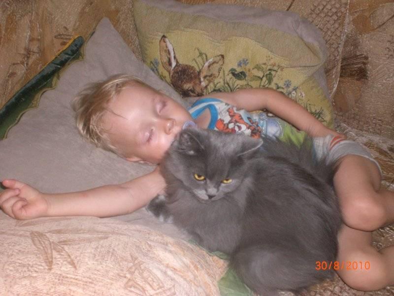 Что делать, если возникла аллергия на кота у ребёнка: симптомы и полное описание