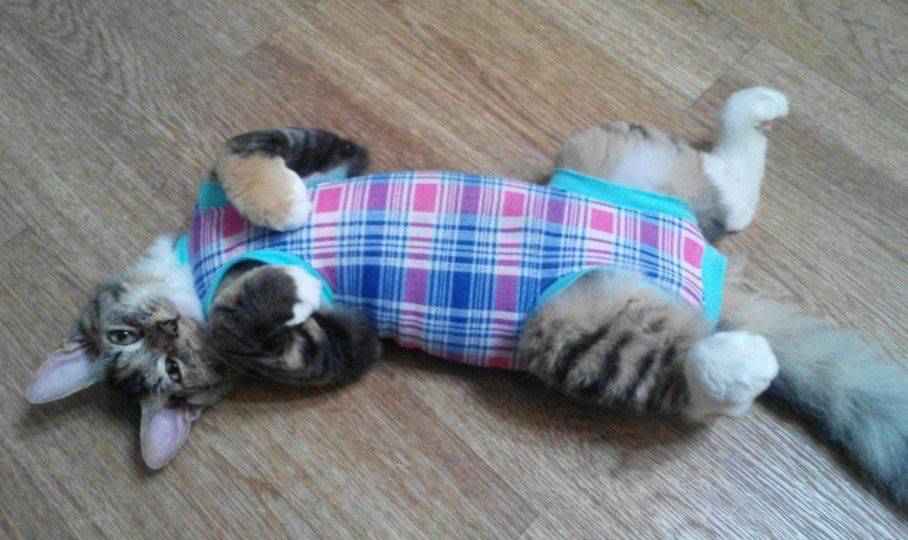 Поведение кошки после стерилизации