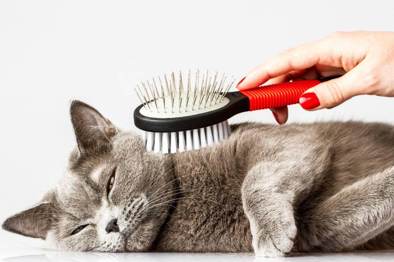 Место для кошки - 130 фото и видео советы по выбору лучшего места в квартире или доме для кошачьих