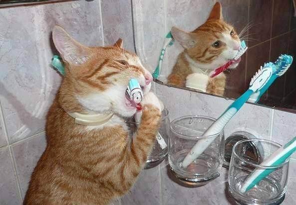 Правильный уход за кошками: содержание в домашних условиях