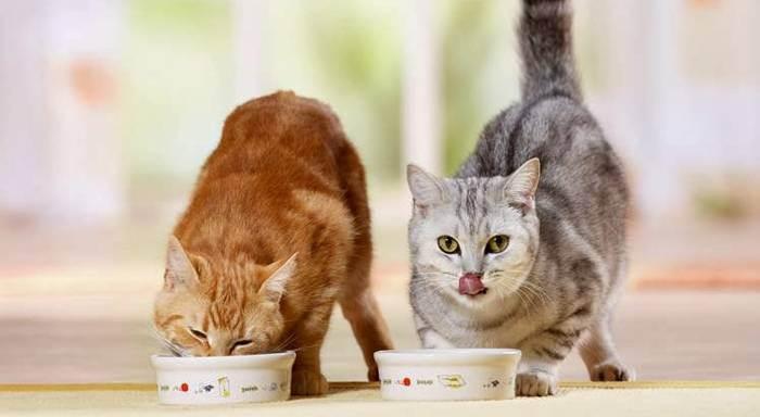 Всё про корма для кошек - классы кормов для кошек, как выбрать корм, какой корм для кошки лучше, вредны ли корма, про сухой и консервированный (жидкий) корм, аллергия на корм у кошек - всё о кошках и котах