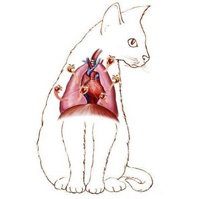 Как заразиться кошачьим гриппом