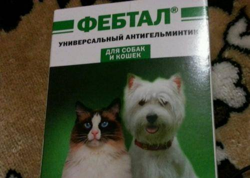 Фебтал для кошек: инструкция по применению, отзывы, форма выпуска и личная безопасность
