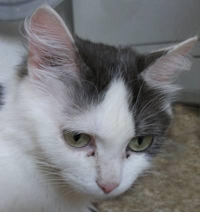 Причины и лечение выделений из глаз коричневого цвета у котов