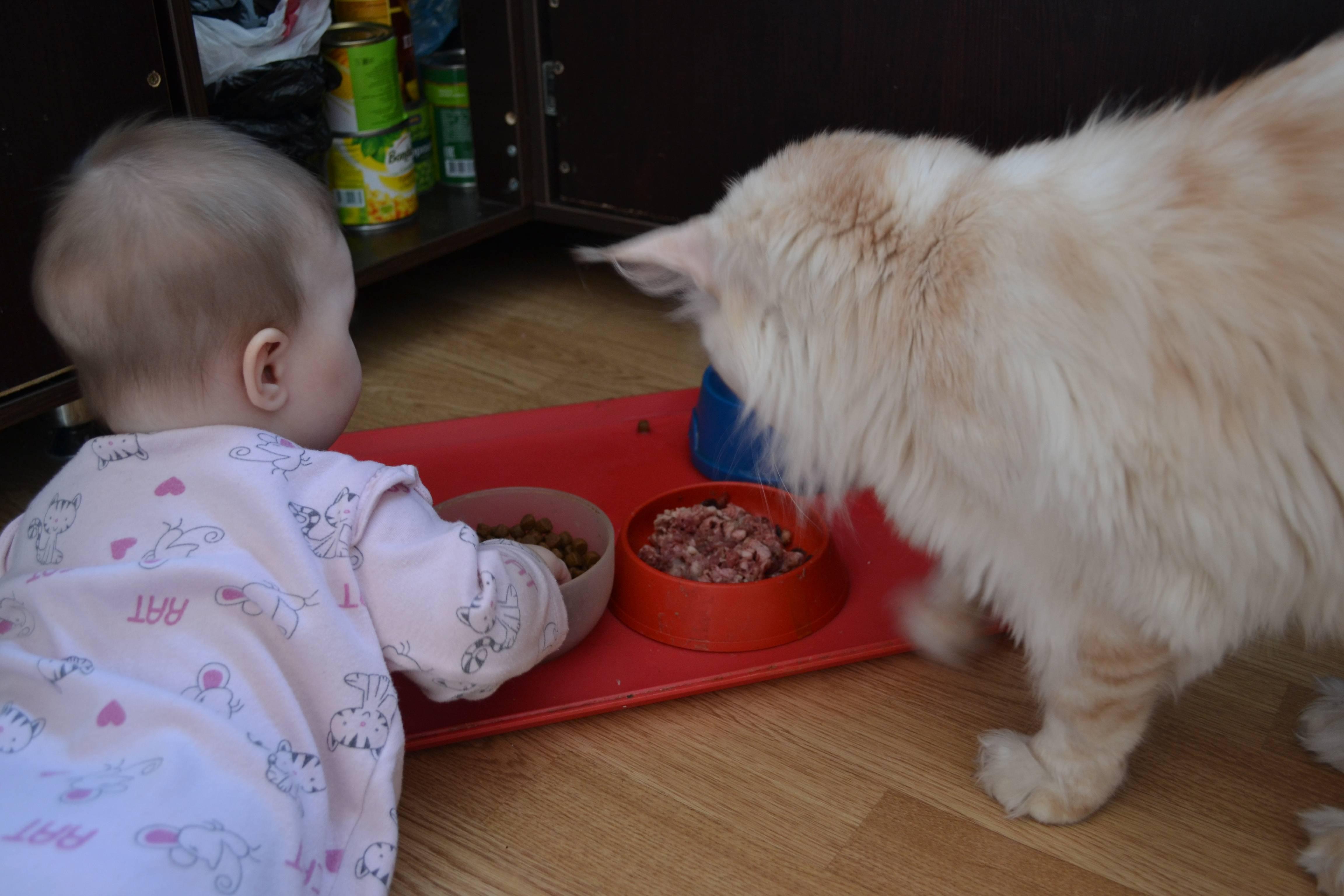 В каком возрасте и как приучать котенка кушать самостоятельно
