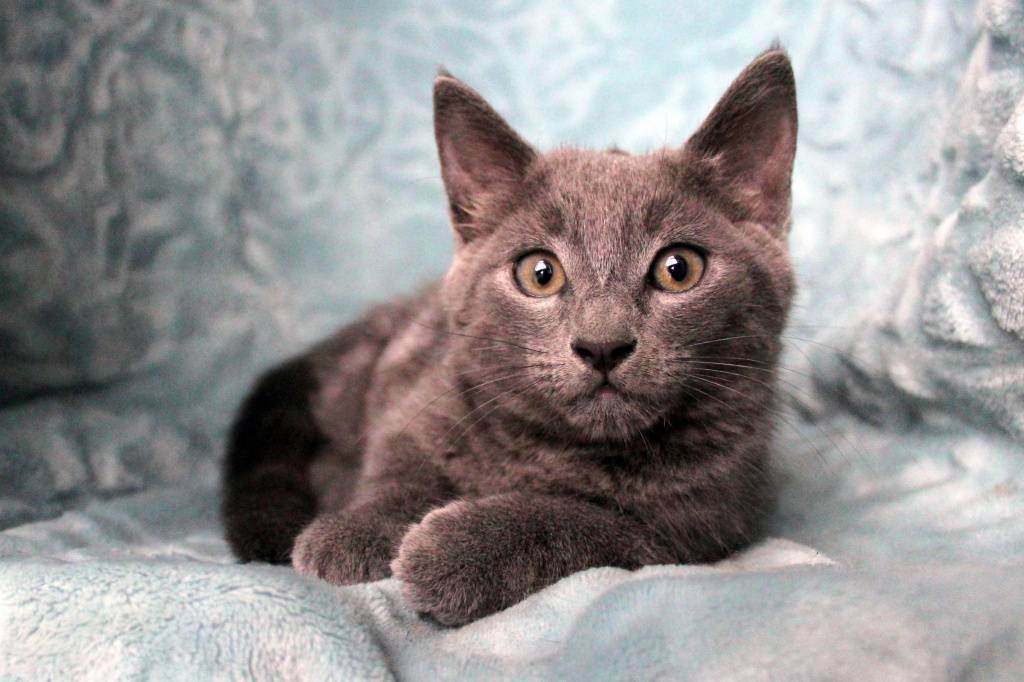 Как ухаживать за кошкой после стерилизации? рассказывает ветеринар