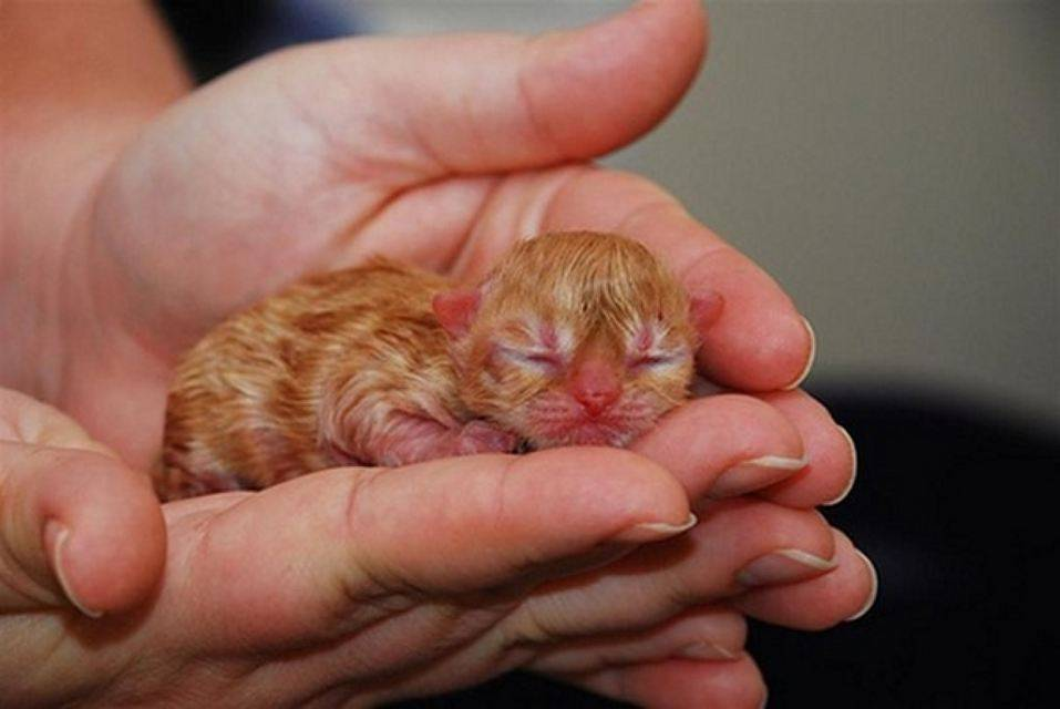 Как развивается зрение у новорожденных котят? почему котята и щенята рождаются слепыми. - всё об аллергии