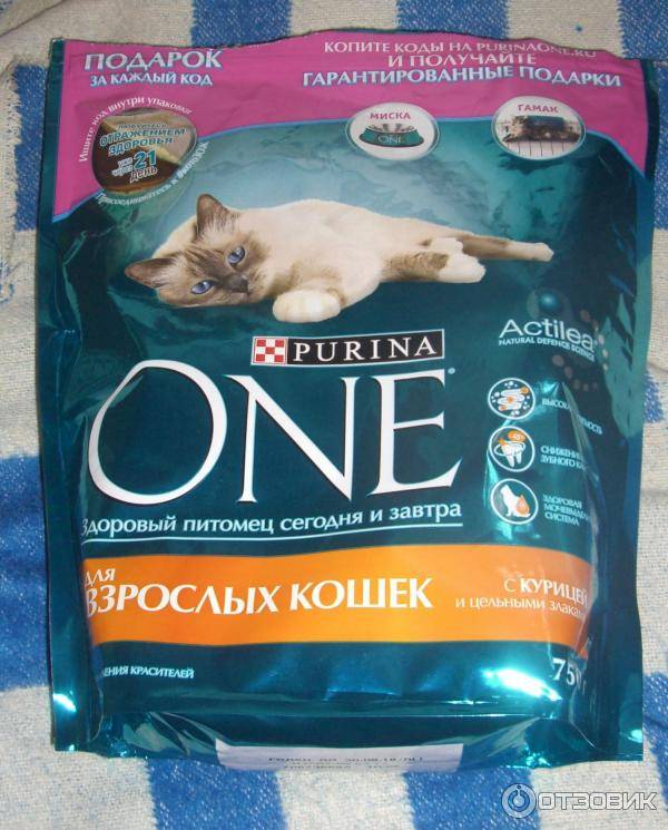 Саммит - корм для кошек: отзывы, цена, состав