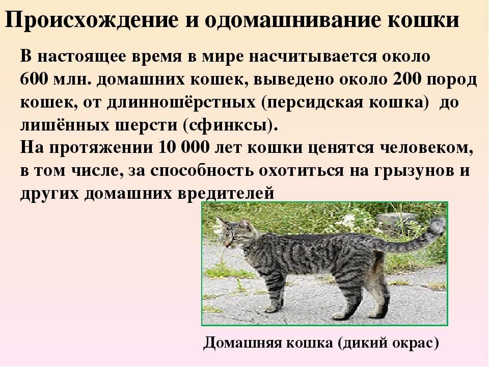 Сколько видов кошек существует в мире?